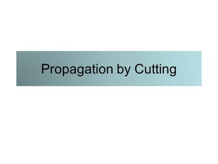 Propagation by Cutting. Woody cuttings Tip Simple or straight Heel Mallet.