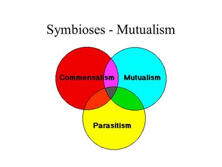 Symbioses - Mutualism. Symbioses Symbioses - species living in close association Parasitism +,- parasite benefits, host harmed Commensalism +,0 or 0,0.