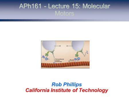 APh161 - Lecture 15: Molecular Motors Rob Phillips California Institute of Technology.
