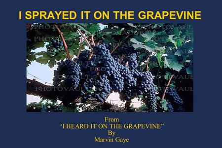 "I SPRAYED IT ON THE GRAPEVINE From ""I HEARD IT ON THE GRAPEVINE"" By Marvin Gaye."