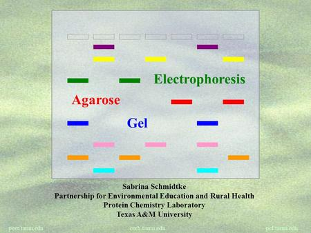 Peer.tamu.edu cerh.tamu.edu pcl.tamu.edu Electrophoresis Gel Agarose Sabrina Schmidtke Partnership for Environmental Education and Rural Health Protein.