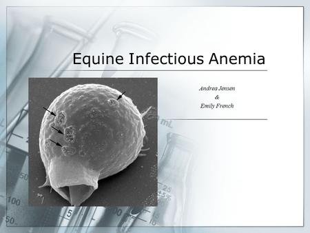 Equine Infectious Anemia Andrea Jensen & Emily French.