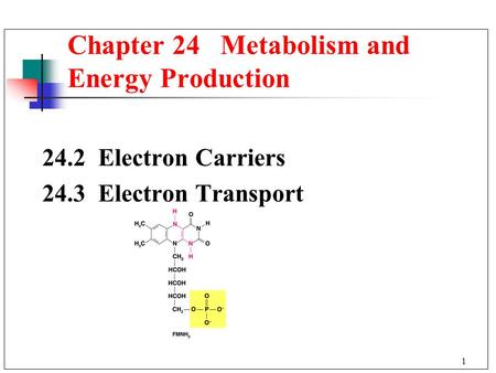 1 24.2 Electron Carriers 24.3 Electron Transport Chapter 24 Metabolism and Energy Production.