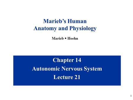 1 Chapter 14 Autonomic Nervous System Lecture 21 Marieb's Human Anatomy and Physiology Marieb  Hoehn.