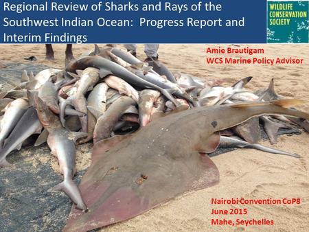 Regional Review of Sharks and Rays of the Southwest Indian Ocean: Progress Report and Interim Findings Amie Brautigam WCS Marine Policy Advisor Nairobi.