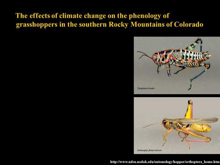 The effects of climate change on the phenology of grasshoppers in the southern Rocky Mountains of Colorado