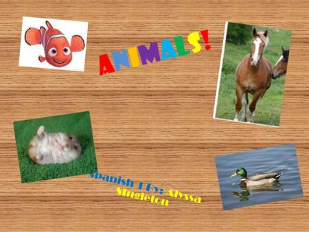 Animals!Animals! Spanish 1 By: Alyssa SIngleton. Animals! Perro Dog! Gato Cat!