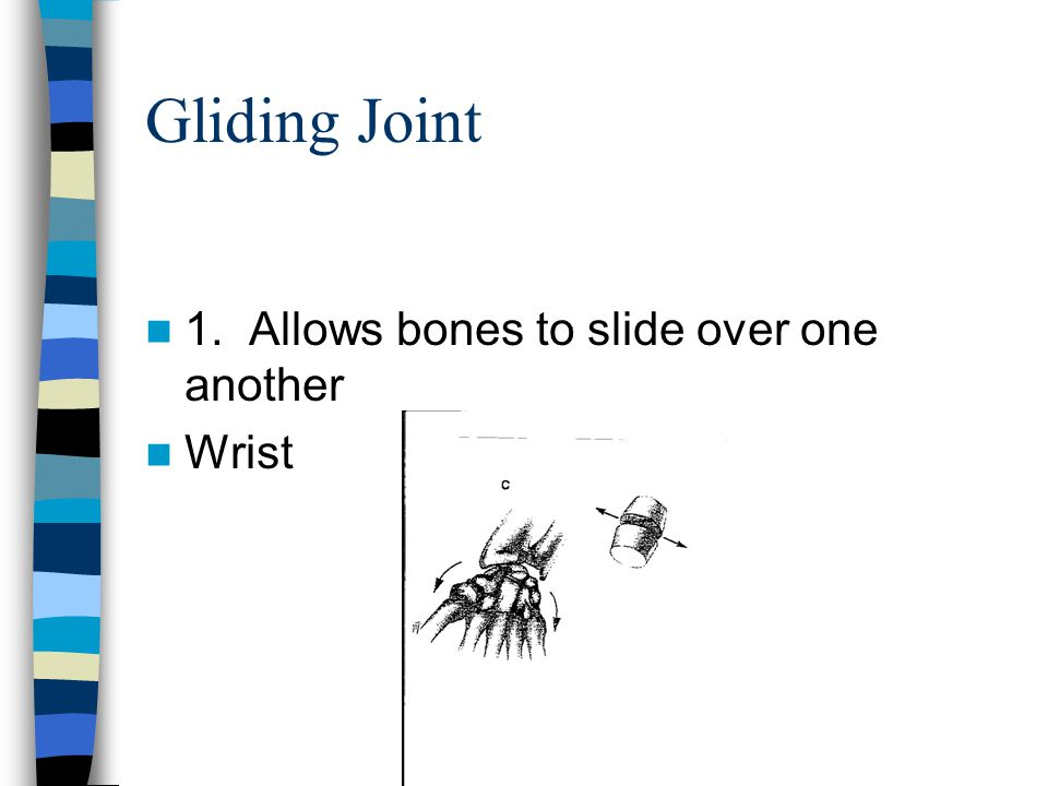 Pivot Joint 1.Allows rotation from side to side 2.