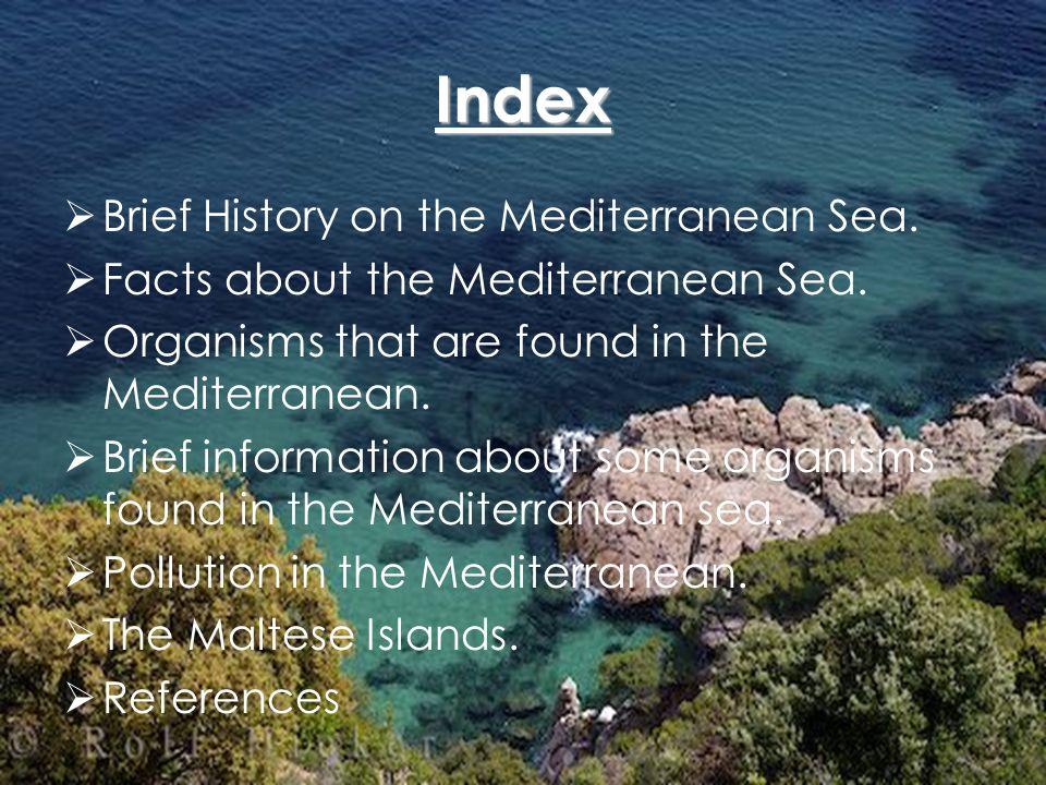 Brief History About the Mediterranean Sea Before the Mediterranean Sea was created, there was the so called Tethys Sea.