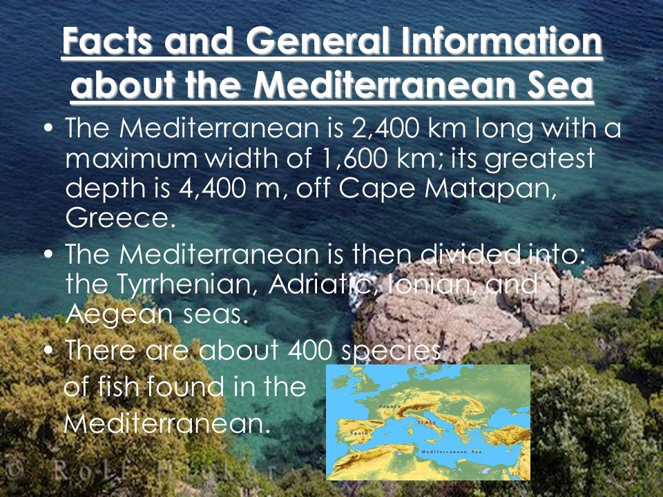 Some Organisms Found in the Mediterranean Adder Pike Stargazer Sting Ray Moray Eel Barracuda