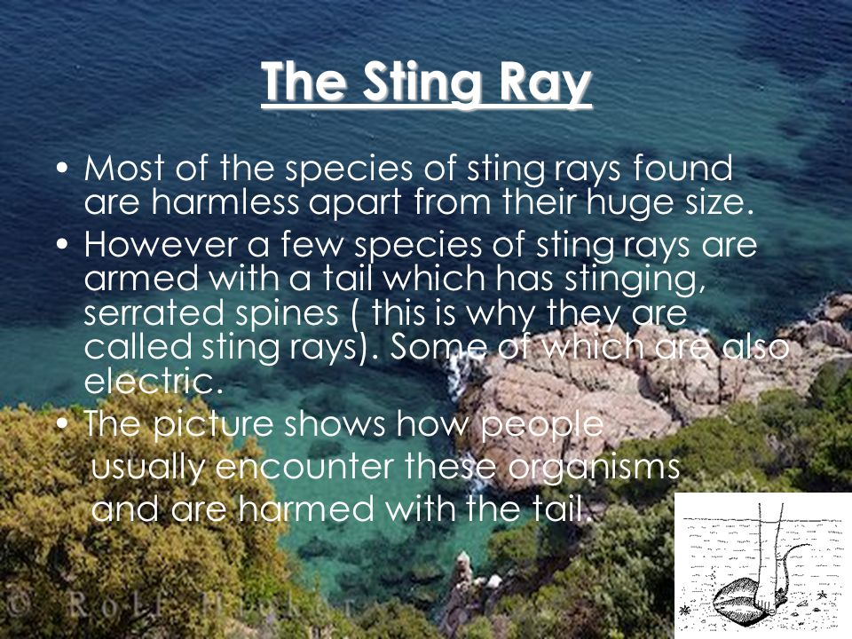 The Moray Eel Being long and snake-like, it can easily be distinguished from other fish.