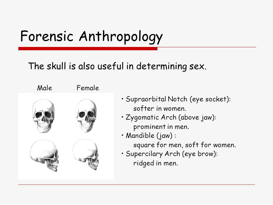 Forensics Anthropology How old was the person at time of death.