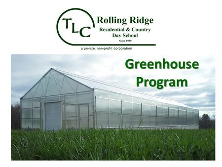 Greenhouse Program. Seasonal Bedding Plant Program Winter growing – March/April sales – Easter lilies, Bulbs, Gerbera daises Winter/Spring growing –
