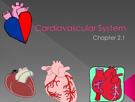 Carries blood throughout the body Includes: Heart Blood Veins Capillaries Arteries.