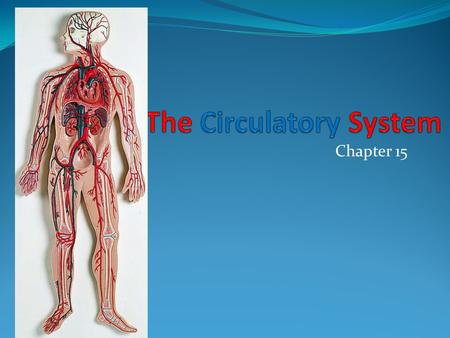 Chapter 15. The Cardiorespiratory System Includes function of the heart, blood vessels, circulation, and gas exchange, between the blood and atmosphere.