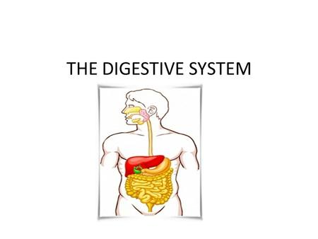 THE DIGESTIVE SYSTEM. Digestion- the process by which the body breaks down food into smaller nutrient molecules to be used by the body as fuel. The three.