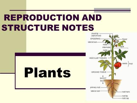 REPRODUCTION AND STRUCTURE NOTES Plants. Plant Reproduction Reproduction is how organisms make new individuals of the same kind. Plants (and many other.