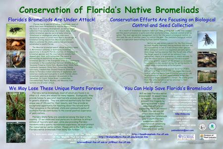 Conservation of Florida's Native Bromeliads We May Lose These Unique Plants Forever Florida's Bromeliads Are Under Attack! Conservation Efforts Are Focusing.