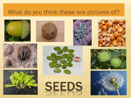 What do you think these are pictures of?.  Where can you find seeds? In our food In our backyards.