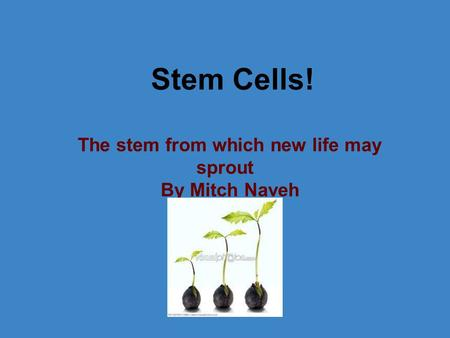 Stem Cells! The stem from which new life may sprout By Mitch Naveh.