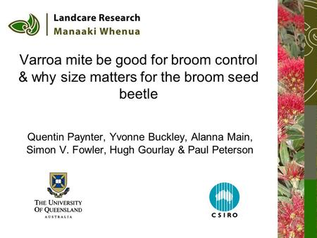 Varroa mite be good for broom control & why size matters for the broom seed beetle Quentin Paynter, Yvonne Buckley, Alanna Main, Simon V. Fowler, Hugh.