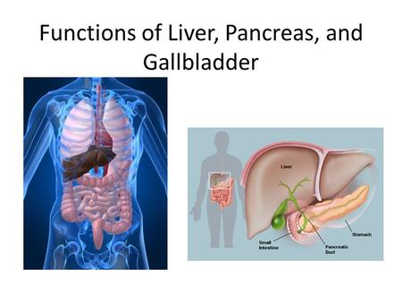 Functions of Liver, Pancreas, and Gallbladder. The Digestive System The digestive tract is a series of hollow organs joined in a tube from the mouth to.