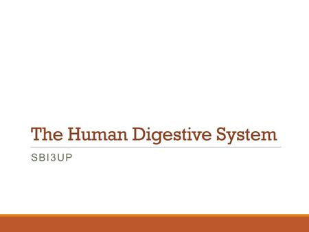 The Human Digestive System SBI3UP. The Human Digestive System The digestive tract has numerous organs with specific functions. Each organ helps to breakdown.