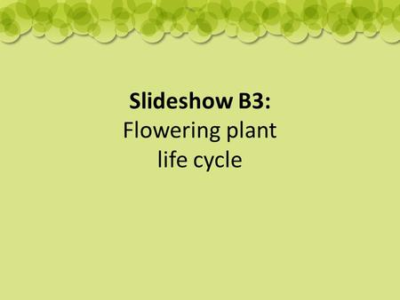 Slideshow B3: Flowering plant life cycle. Seeds are made when the flower dies.