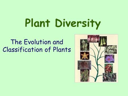 The Evolution and Classification of Plants