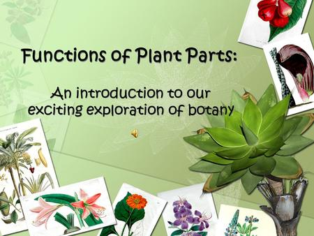 Functions of Plant Parts: An introduction to our exciting exploration of botany.
