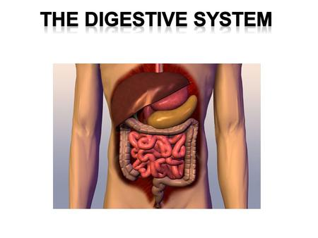 PLO's C1 - analyze the functional interrelationships of the structures of the digestive system.