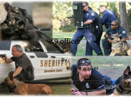 K9 officer By : Katlyn walker. Job description Canine officers are police officers who work with specially trained detector dogs, usually to detect illegal.