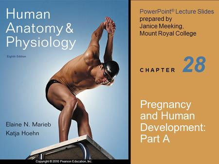 Pregnancy and Human Development: Part A