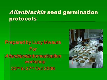 Prepared by Lucy Mwaura For Allanblackia domestication workshop 23 rd to 27 th Oct 2006 Allanblackia seed germination protocols.