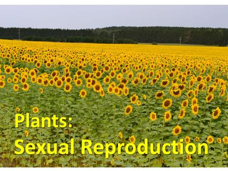 Plants: Sexual Reproduction. The Flower: Parts.