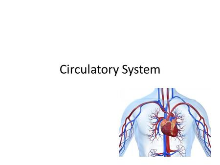 Circulatory System. Structures and Functions of the CIRCULATORY SYSTEM 1.Gets Needed substances to cells – carried by blood – oxygen and glucose 2. Picks.