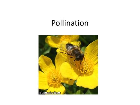 Pollination. What is pollination ? Pollination is the means by which plants are fertilized and cause fruit to grow. Pollination can occur by wind, insect,