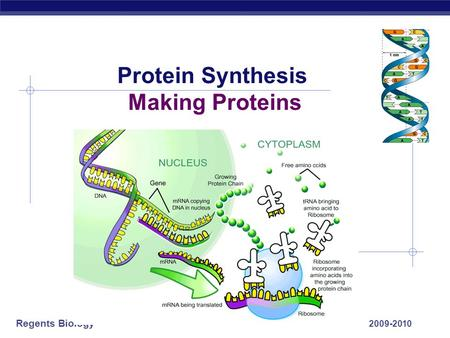 Regents Biology 2009-2010 Protein Synthesis Making Proteins.