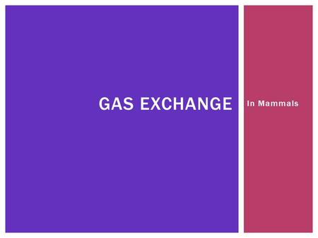 In Mammals GAS EXCHANGE.  Mammals are active so they have a high oxygen demand GAS EXCHANGE IN MAMMALS.