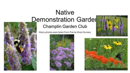 Native Demonstration Garden Champlin Garden Club Many photos were taken from Prairie Moon Nursery.