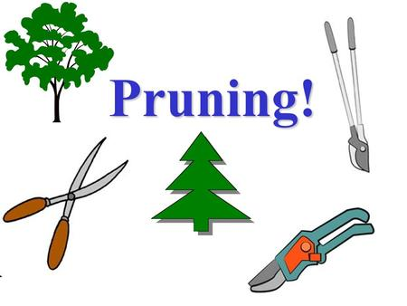Pruning!. Equipment Pruning, why do it? Improve plant healthImprove plant health Increase light and air circulation in the canopy.