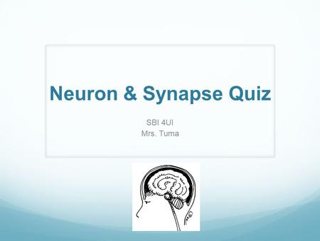 Neuron & Synapse Quiz SBI 4UI Mrs. Tuma. 1. What part of the neuron receives messages from other neurons? (a) axon (b) myelin (c) dendrite (d) Schwann.