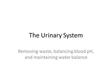 The Urinary System Removing waste, balancing blood pH, and maintaining water balance.