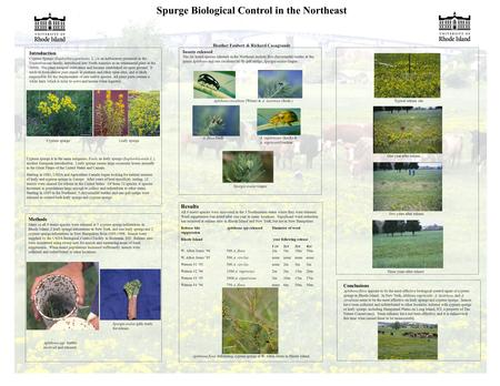 Spurge Biological Control in the Northeast Heather Faubert & Richard Casagrande Introduction Cypress Spurge (Euphorbia cyparissias, L.) is an herbaceous.