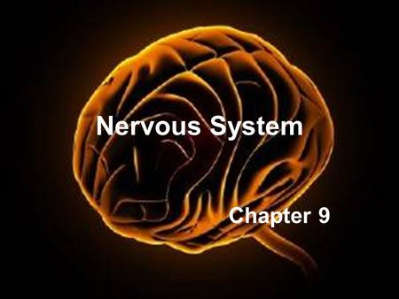 Nervous System Chapter 9. Introduction A.The nervous system is composed of neurons and neuroglia. 1. Neurons transmit nerve impulses along nerve fibers.