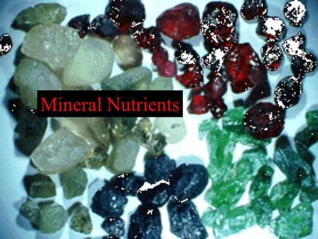 Mineral Nutrients. I. Introduction A. Definition B. Evidence 1. Julius Sachs Experiment.