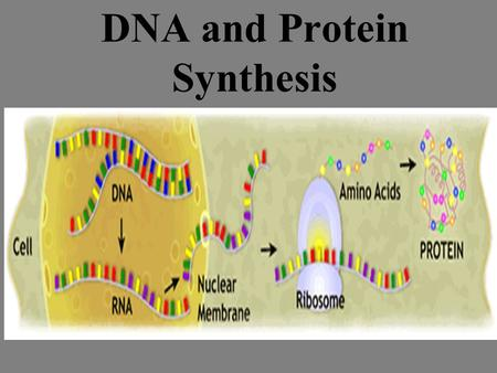 DNA and Protein Synthesis Why are you, YOU? You are made of basically four types of molecules. DNA is the molecule that gives instructions to your cells.
