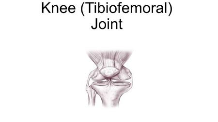 Knee (Tibiofemoral) Joint. Bones of the Knee Joint Femur -Longest and strongest bone in the body Lateral and medial epicondyles -The widest points of.