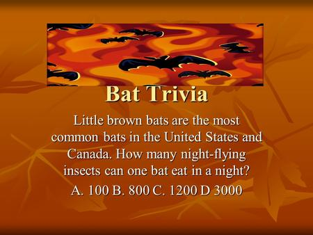 Bat Trivia Little brown bats are the most common bats in the United States and Canada. How many night-flying insects can one bat eat in a night? A. 100.