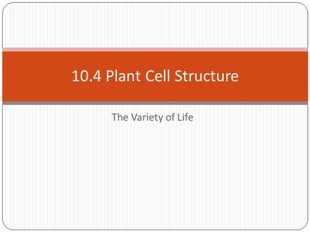 The Variety of Life 10.4 Plant Cell Structure. Plant Cell Structure Learning Objectives There are fundamental differences between plant cells and animal.